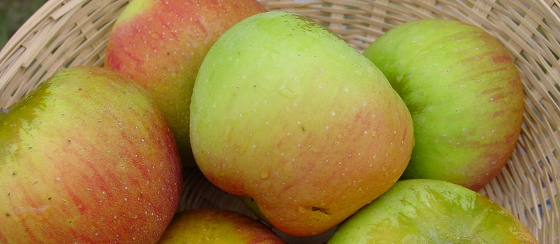 cropped apples