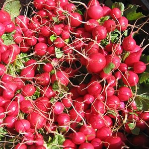 early-scarlet-globe-radish-3
