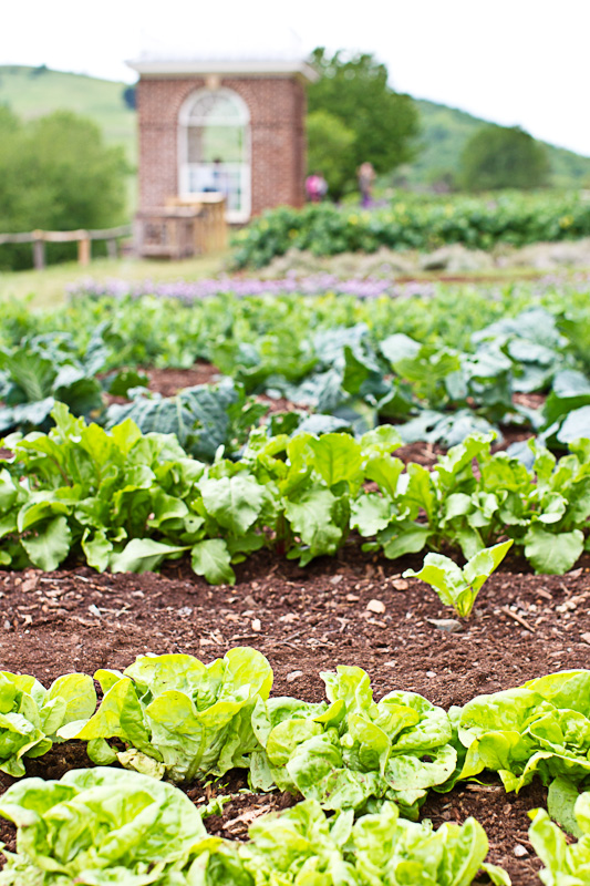 Monticello-Alice Waters apr2012 JLooney preview-007
