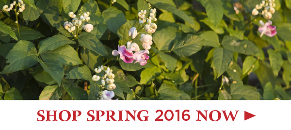Shop Spring 2016 Plants Now